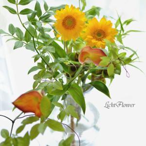 植物が光合成で成長するように