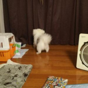 ( *´艸`)にゃんこ、猫パンチにゃーーーー。