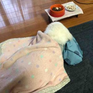 (((( ;゚д゚)))ごはんを目の前にして寝てるなんて・・・。