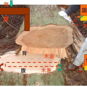 木の家を建てる時、無垢の木で建てる時、一年の周期で寒い今の時期に木を切るのばベスト