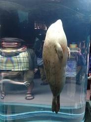 北海道釣行記 4