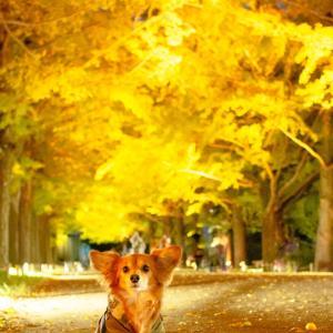 紅葉ライトアップと愛犬撮影