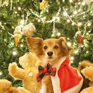 ワンコ達とクリスマスパーティー
