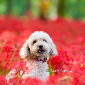 赤の絨毯♡