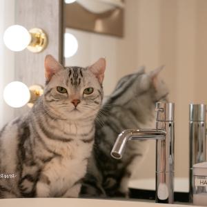 手を洗ってるか洗面所でチェックしている猫