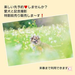 特別割引『愛犬と記念撮影』前売り販売します!