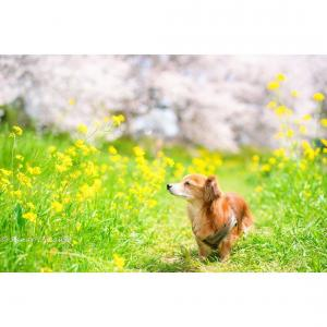 ある春の日に愛犬と♥️