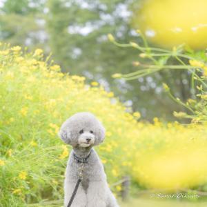 愛犬と一緒にフォトレッスン♪秋