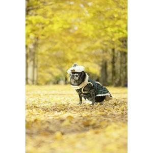 紅葉と愛犬猫撮影&愛犬と一緒にフォトレッスン