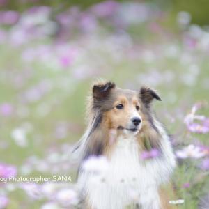 春の愛犬撮影受付けてます!