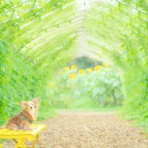 緑のトンネルでワンコ撮影
