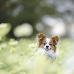 秋の愛犬プライベート撮影&フォトレッスン受付始めました!