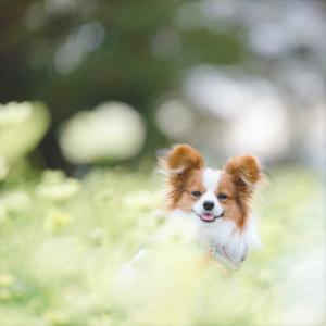 秋の愛犬撮影の写真紹介