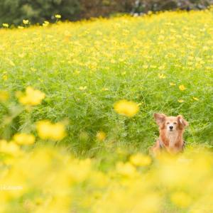 秋の愛犬撮影 お得情報!