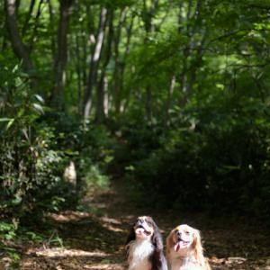 犬連れ夏の長野北部旅行①:斑尾高原、ペットと歩けるトレッキングトレイル