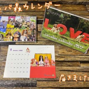 「キャバ森カレンダー2022」一足早くゲットしました!可愛いキャバリア写真がいっぱいでオススメです