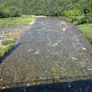 3週間ぶりの付知川