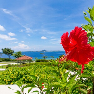 沖縄旅行をキャンセルしました(>_<)
