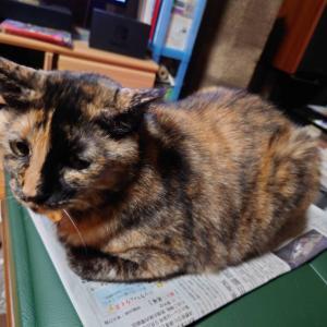 http://konoha1012.blog.fc2.com/blog-entry-2352.html