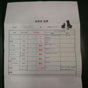 尿検査20101