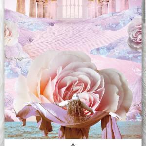 【永遠に咲き続けるバラ】1月20日(水)