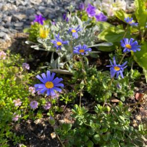4月5月のお庭の様子。