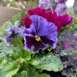 娘のお誕生日と、春のカラフル花壇。