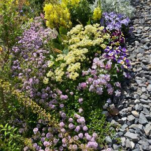 今朝のお庭と葉牡丹リースの今。