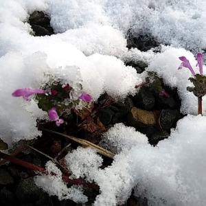 雪の休みはローラーの刑 63キロ!