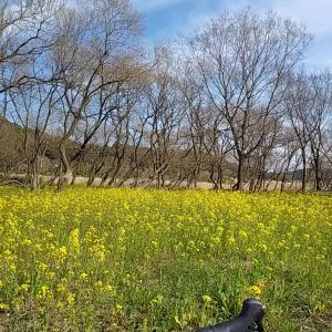 春らしい素敵な景色を見に行く