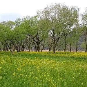 春だ~!つくしとモンベルご飯の53キロ