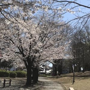 桜の後に雪