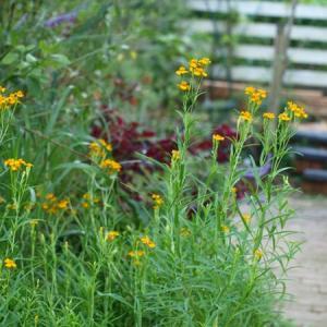 秋の庭とステンドパネル作り2枚目