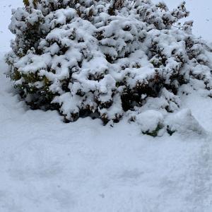 雪の季節はひとり鍋