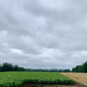 北海道 十勝の畑