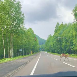 大雪国立公園とエゾ鹿