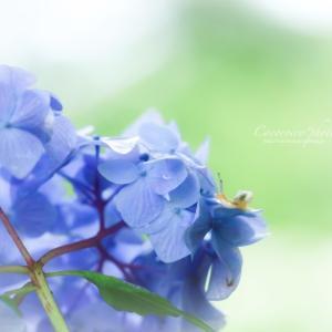 ** お花見 **