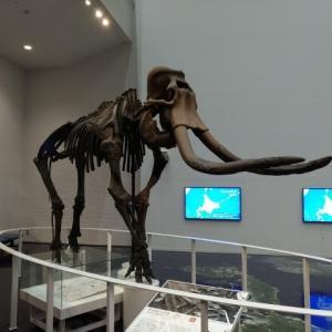 アイヌ文化に触れるため「北海道博物館」へ。