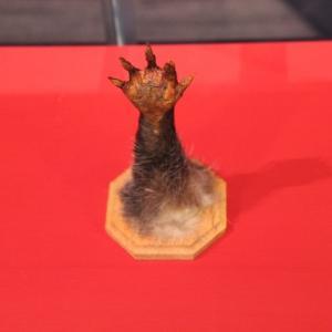 河童の腕も展示広島県「三次もののけミュージアム」
