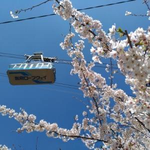 桜が満開だった「別府ロープウェイ」