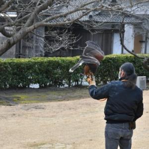 島津の鷹狩り