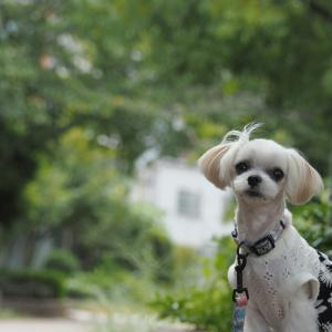 『犬の幼稚園バウバウ』さんで写真教室