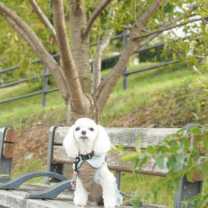 秋を探して賀茂川散歩