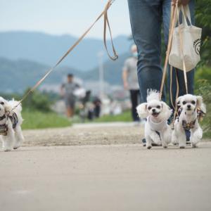 久しぶりの賀茂川散歩