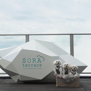雲の上のテラス『SORA terrace』へ