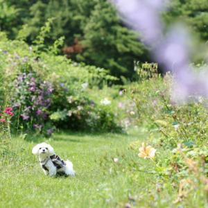 十勝ガーデン巡り~紫竹ガーデン~