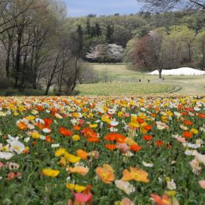 ♪国営武蔵丘陵森林公園~花畑が賑やか!