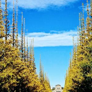 神宮外苑の銀杏並木と絵画館