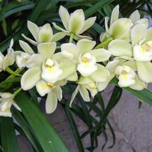 温室の花たちと水辺の野の花