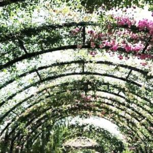「ポーの一族」秘密の花園 Vol.3